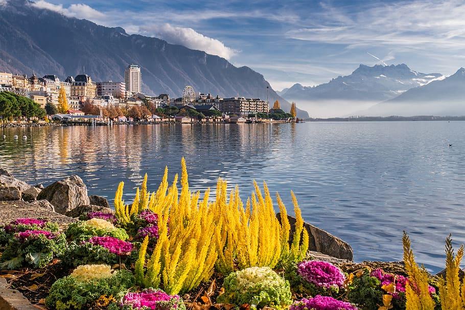fleurs et végétation avec lac, ville et montagnes