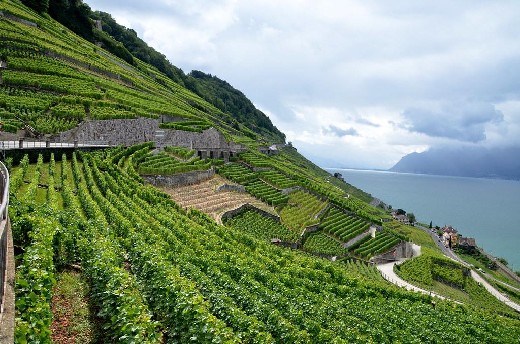 vignes sur colline en terrasse avec lac et ciel nuageux