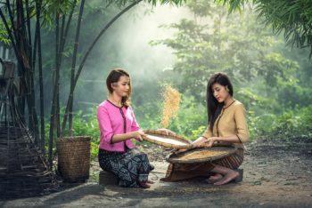 thailande_riz